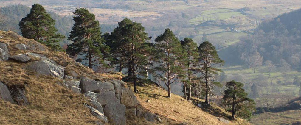Nantgwynant o Lwybr Watkin